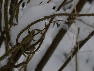 Natur-Knoten