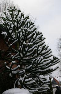 Bizarre Strukturen im Schnee