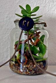 Glas als Pflanzenbehälter