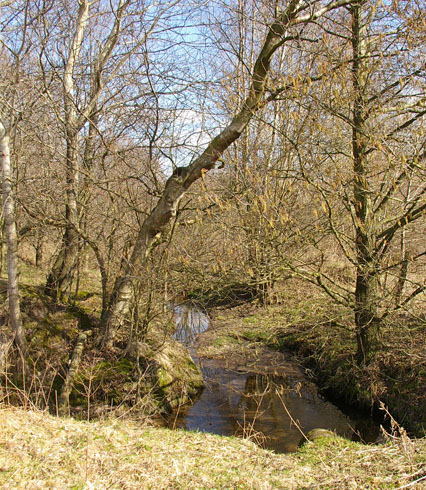 Bach, Landschaft in Dithmarschen
