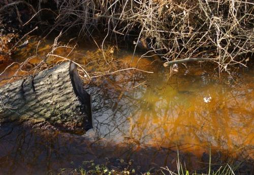 braunes Wasser in Dithmarschen