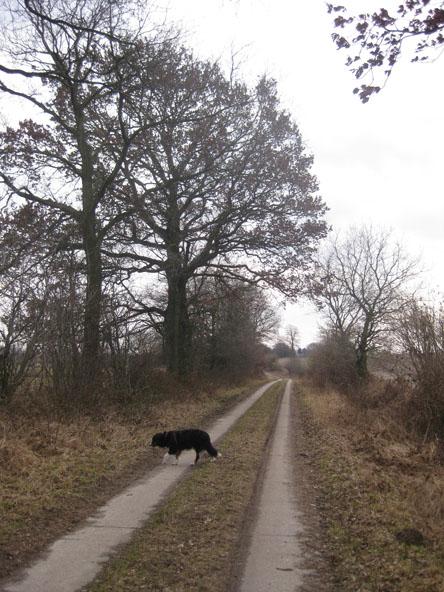 Spazierweg in Dithmarschen im Winter