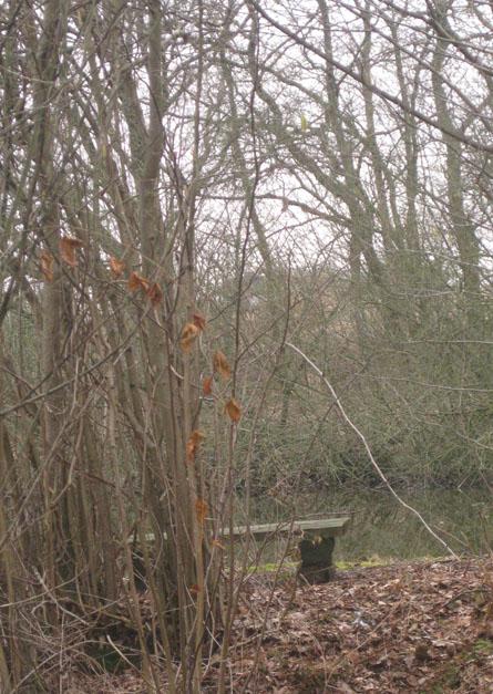 Bank, Natur, Teich