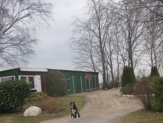 Border collie Hofhund