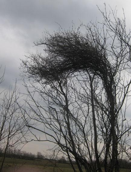 kahler Strauch im März