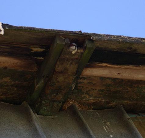 Vogel im Dachpfosten