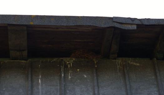 Vogelnest unterm Dach