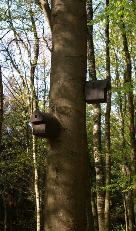 Vogelhäuser im Riesewohld