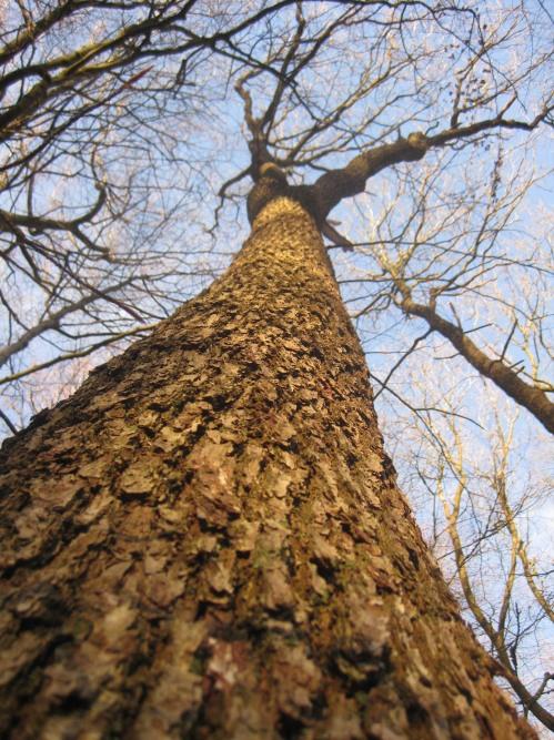 Riesewohld Wald Baumstamm
