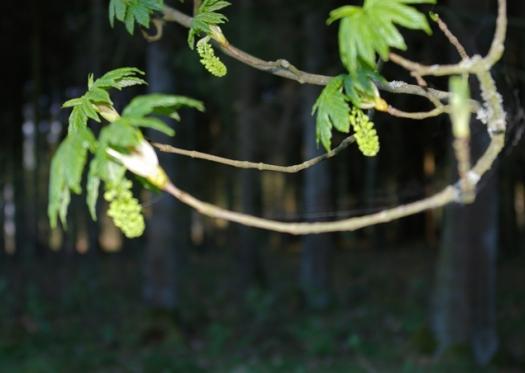 Blätter und Früchte im Riesewohld