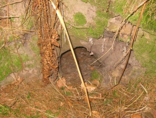 Höhle Wald Waldbewohner Riesewohld Dithmarschen