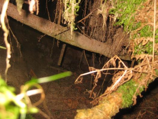 Höhleneingang Riesewohld Wald Dithmarschen