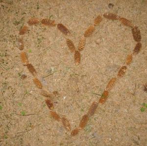 Herz aus Tannenzapfen