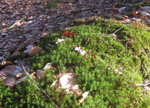 Waldboden Riesewohld Dithmarschen