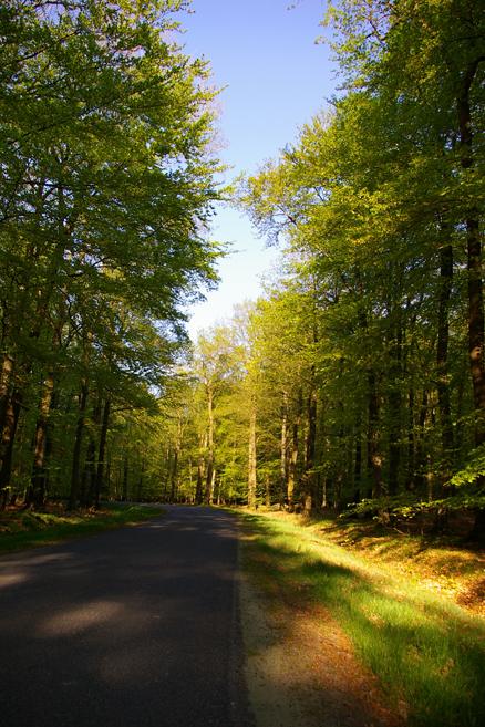 Waldweg Riesewohld Dithmarschen