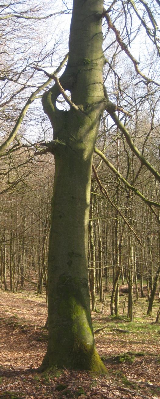 Baum mit Loch Wald Natur