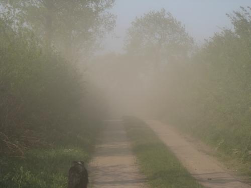 Sandsturm Verwehungen in Dithmarschen