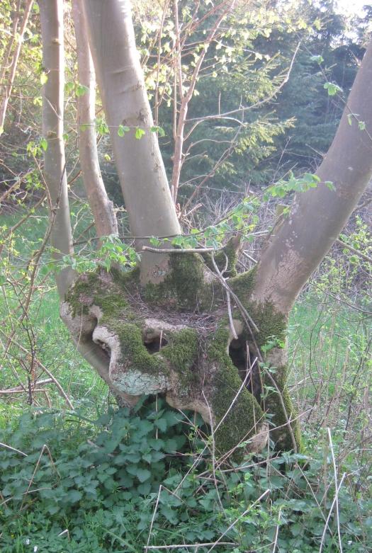 skuriler Baumstumpf Baum Wald