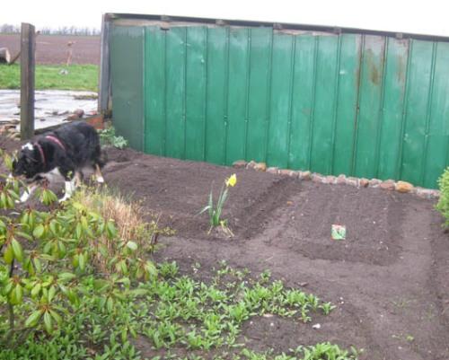 Gemuesebeet anlegen Garten Beete Anpflanzen Gartenarbeit