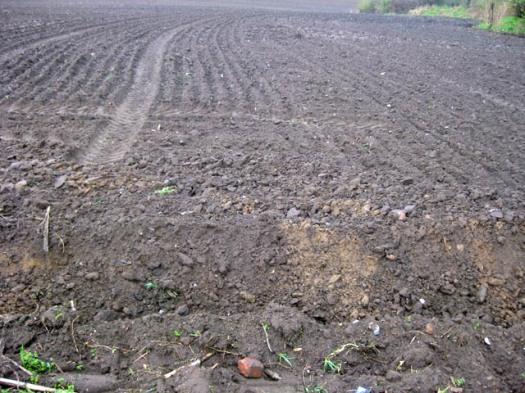 nahaufnahme Acker gepfluegt Maisfeld Landwirtschaft