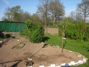 Apfelbaum und Stachelbeere, Stachelbeerstrauch, Apfelbaum