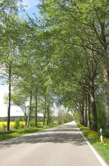 Birkenallee, Allee, Dithmarschen, Schleswig-Holstein