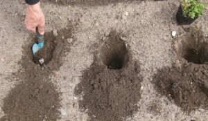 die Loecher sind ausgehoben Kraeuterbeet anlegen