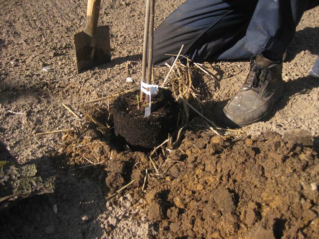 Einsetzen apfelbaum einpflanzen recyclingkunst und der versuch langsam und nachhaltig zu leben for Landhausgarten deko