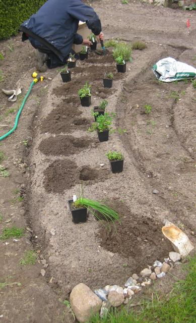 Pflanze für Pflanze, Kraeuterbeet anlegen