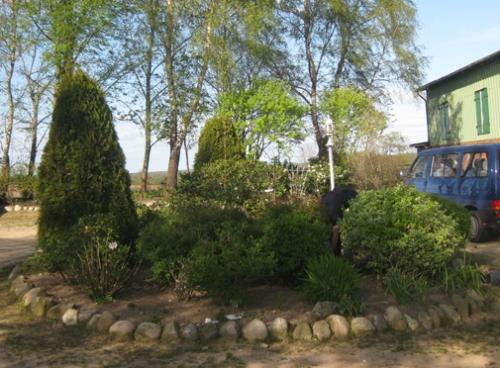 Rundbeet mit Pflaumenbaum
