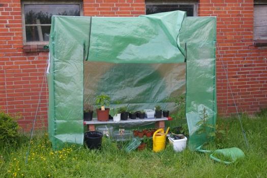 Gewaechshaus Tomaten Pflanzen Garten