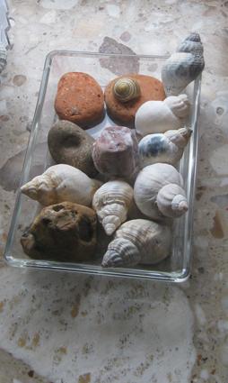 Muschelschale Glasschale mit Muscheln