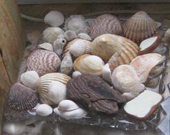 Muschelschale Schale mit verschiedenem Strandgut
