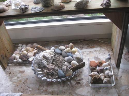 Muschelschalen ensemble verschiedene Muschelnschalen