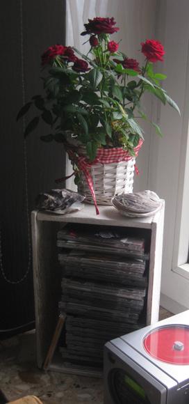 Rose und Muscheln als Dekoration für die Fensterbank