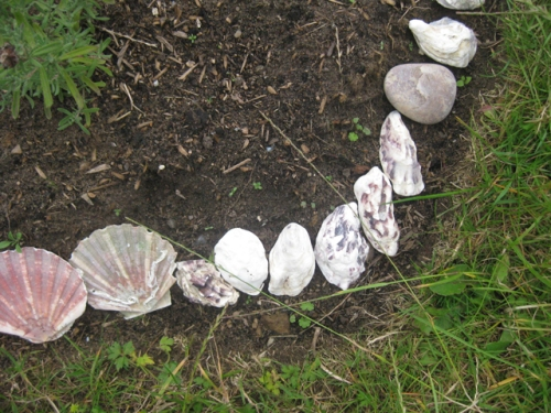 Muschelnahaufnahme Nahaufnahme Muscheln im Garten