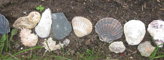 Muschelnahaufnahme Gartenschmuck Landhausgarten