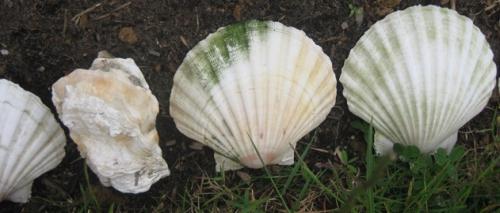 Muschelnahaufnahme Beeteinfassung Gartenarbeit