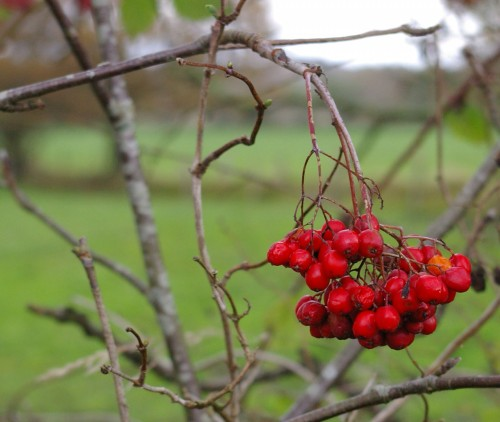 Beeren im Herbst, Fotografie