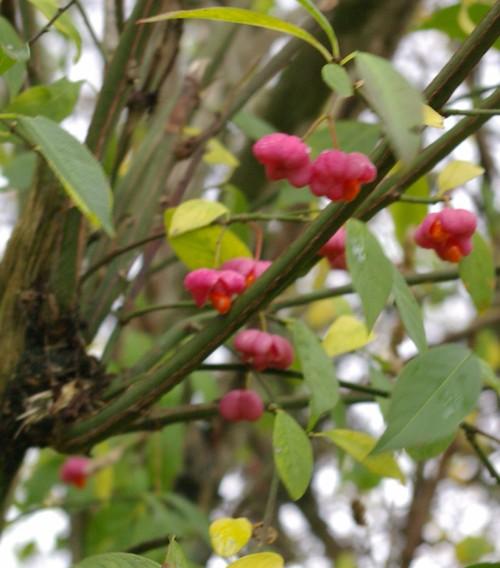 Beeren im Herbst, Foto