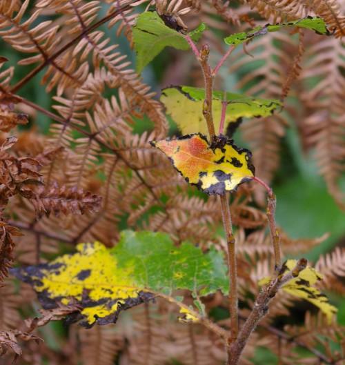 Bunte Blätter im Herbst, Foto