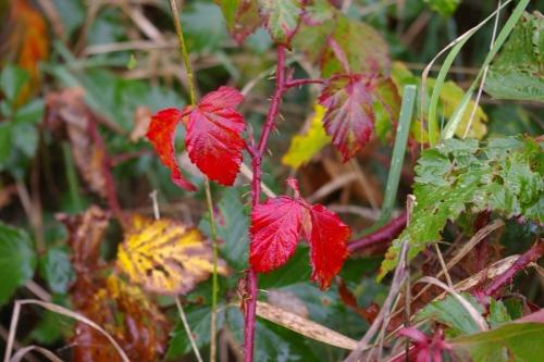 Herbstblaetter im Wind in Dithmarschen, Foto