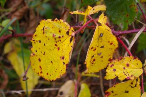 gelbe Blätter im Herbst, Foto