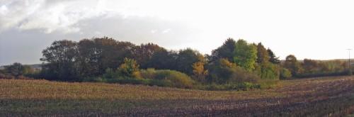 Herbstlandschaft  Feld