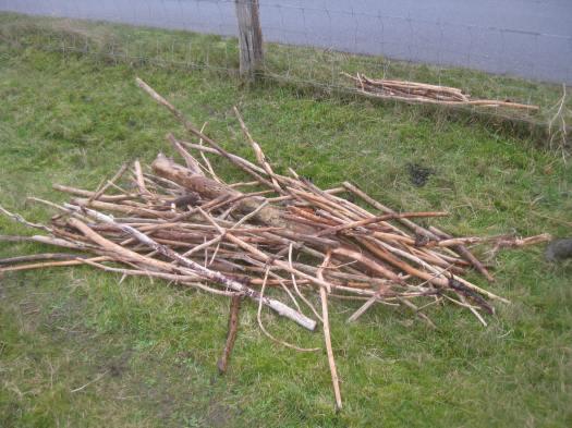 Treibholz am Wegrand