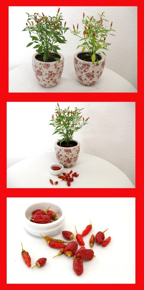 Rote Pepperoni Pflanzen