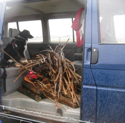 Treibholz im Auto