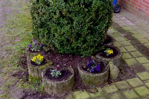 Fruehling Buchsbaum Stiefmuetterchen Garten