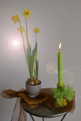 Osterglocken Narzissen mit Kerze und Schleife Schlüter Dithmarschen
