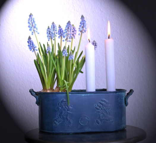 Perlhyacinten Kerzen Schlüter Dithmarschen
